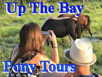 up the bay pony tours banner ad