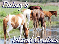 daisey's cruises banner ad