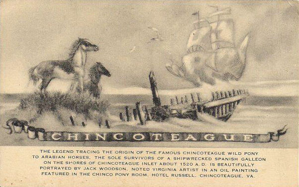 old chincoteague pony postcard